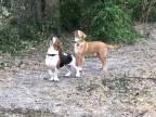 Keď psy zostanú v nemom úžase