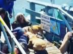Rozzúrený pitbull napadol muža a ďalšieho psa