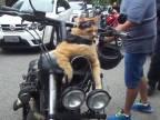 Medzičasom v Brazílii na motozjazde