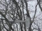 Vrana sa rozhodla skoncovať so svojim životom