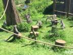 Lemurom sa snívalo o kačacine