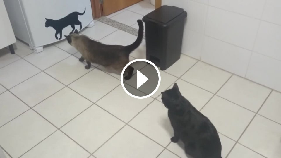 Zadok a mačička videá
