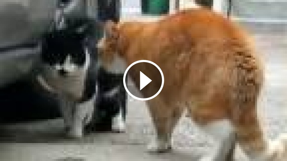 pic mačička a zadok