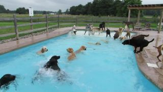 Bazénová párty pre psov