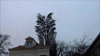 Preťažený strom