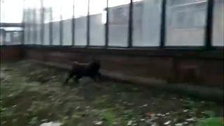 Kamikadze mačka