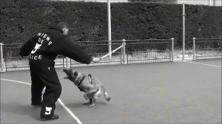 Výcvik policajných psov (Francúzsko)