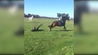 Urážať koníky sa nevypláca!