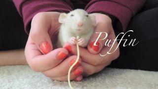 Svoje tri potkany naučila skvelé triky