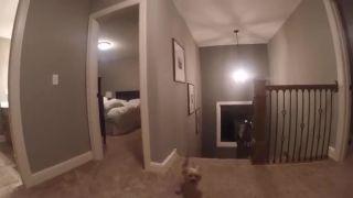 Hra na schovávačku s GoPro kamerou