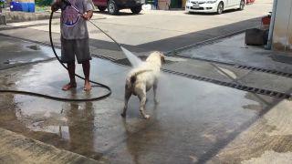 Pravidelný zákazník v autoumývarni (wapkovanie psa)
