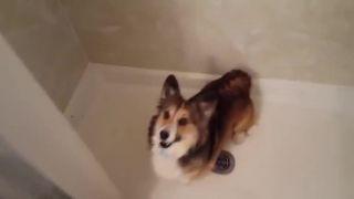 Daj mi sprchu, daj mi sprchu!