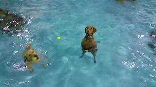 Ja plávať nebudem a basta!
