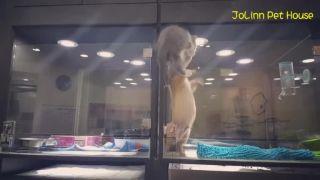 Osamelé mačiatko v predajni so zvieratami (Taiwan)