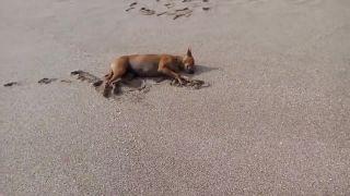 Len tak čilujeme na pláži!