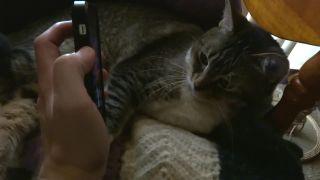 Mačka múdrejšia ako väčšina Američanov