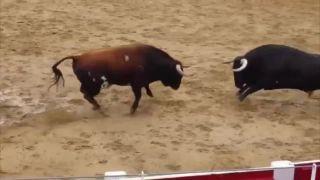Jedna zrážka = 2 býky dole (Španielsko)