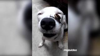Tomuto psovi naozaj nič nevadí!