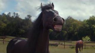 Keď sa ti kone smejú!