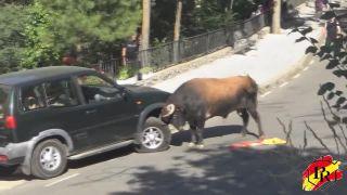 Býk si zobral pod lupu Nissan Terrano 2