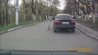 Venčenie psa (LVL Ukrajina)