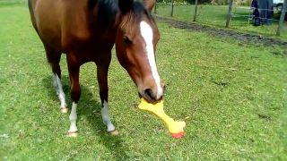 Kôň objavil pískaciu gumenú sliepku