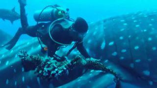 Záchrana morských živočíchov v núdzi