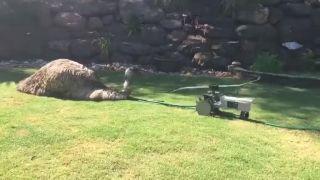 video Teplý deň v Južnej Austrálii