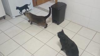 video Pozor, v dome je nová mačka!