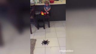 Gratulujeme, práve ste úspešne nainštalovali arachnofóbiu!
