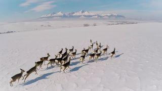 Safari pod Tatrami