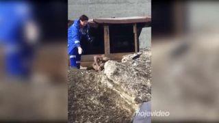 Jarná únava v kombinácii s krokodílom (Rusko)