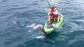 Chytať žraloky z kajaku nie je najlepší nápad (Florida)