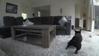 Čo robí váš pes kým ste v robote?