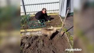 Najlepší pomocník v záhradke (Rusko)