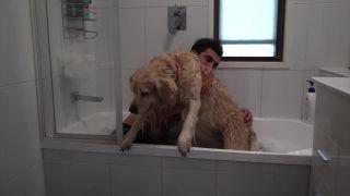 Máš doma nemotorného psa?