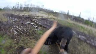 Poľovníka napadol medveď baribal (Kanada)