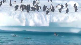 Tučniaky predsa nevedia lietať (hovadina dňa)