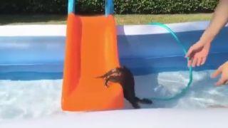 S vydrou v bazéne