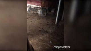 Máte na farme problém s myšami? (Austrália)