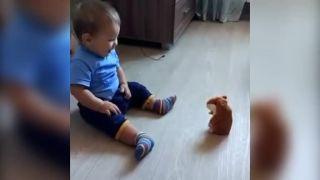 Opakovací škrečok nie je najlepšia hračka pre malé deti
