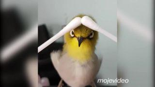 Kvalitná masáž vtáka je stále dobrý nápad