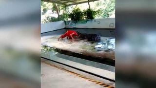 Krokodíl sa zahryzol mužovi do hlavy