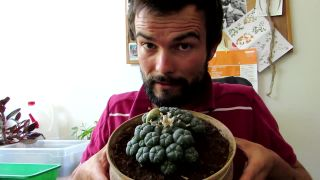 Lophophora - kultový kaktus mexických šamanov
