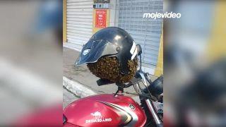 Do prilby sa mu nasťahoval roj včiel (Brazília)