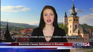 Slovenská borovička v amerických správach!