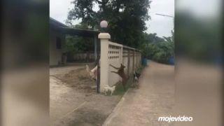 Ešteže ich oddeľoval múr (Thajsko)