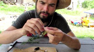 Hrachor hľuznatý - koreňová zelenina priamo z lúk