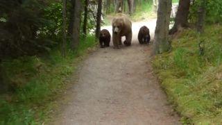 Keď stretneš rodinku medveďov Grizzly (Aljaška)