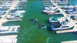 Aj veľrybám občas zlyhá navigácia